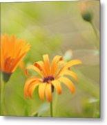 Dreams Of Orange Symphony In Spring  Metal Print
