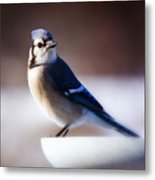 Dreamy Blue Jay Metal Print