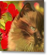 Dreamy Cat With Geranium 2015 Metal Print
