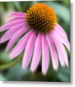 Dreamy Coneflower Metal Print