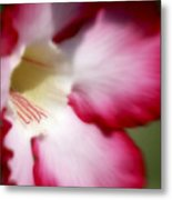 Dreamy Desert Rose Metal Print
