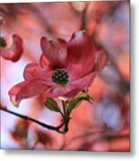 Dreamy Dogwood Metal Print
