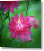 Dreamy Hot Pink Columbine Squared Metal Print