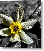 Drenched In Light Metal Print