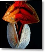 Composition With Dried Flowers Red Hat. Metal Print