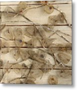 Dried Fruits Of The Cape Gooseberry Metal Print