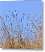 Dried Grass Blue Sky Metal Print