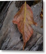 Dried Leaf On Log Metal Print