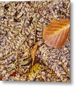 Dried Leaf On The Fern Metal Print