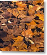Dried Leaves Metal Print