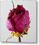 Dried Rose 4 Metal Print