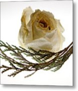 Dried White Rose Metal Print