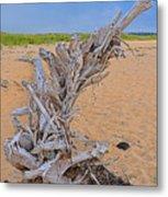 Drift Wood On The Beach Metal Print