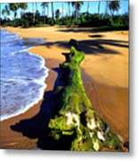 Driftwood And Palms Metal Print