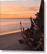 Driftwood At Sunset Metal Print