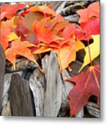 Driftwood Autumn Leaves Art Prints Baslee Troutman Metal Print
