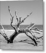 Driftwood Beach In Black And White Metal Print