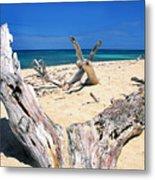 Driftwood Buck Island National Park Metal Print