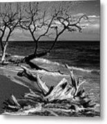 Driftwood Bw Fine Art Photography Print Metal Print