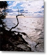 Driftwood Dragon-barnegat Bay Metal Print