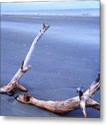 Driftwood Little St Simons Island Metal Print by Thomas R Fletcher