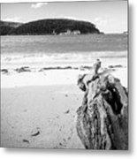 Driftwood On Beach Black And White Metal Print