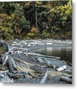 Driftwood On The Beach Sucia Island Metal Print