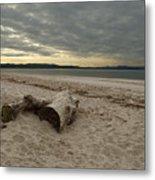 Driftwood On West Sands Metal Print