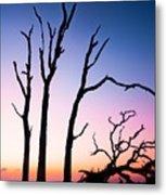 Driftwood Sunrise Metal Print