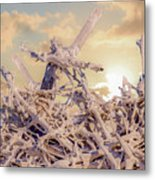 Driftwood Sunset Metal Print