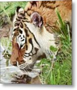Drinking Tiger Metal Print