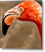 Dripping Flamingo Metal Print