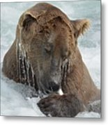 Dripping Grizzly Bear Metal Print