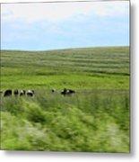 Driveby Shooting No.17 Cows Metal Print