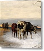Driving The Herd Home In Wintry Landscape Metal Print