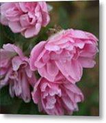 Droopy Pink Roses Metal Print