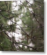 Droplets On Branches Metal Print