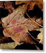 Droplets On Fallen Leaves Metal Print