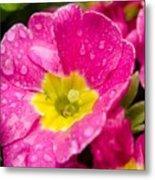 Droplets On Flower Metal Print
