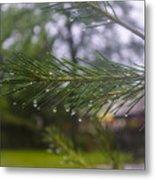 Droplets On Pine Branch Metal Print