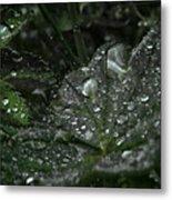 Drops And Leaf Metal Print