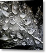 Drops On A Feather Metal Print