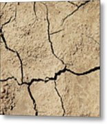 Dry Cracked Earth And Green Leaf Metal Print