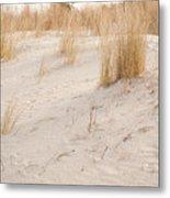 Dry Dune Grass Plants Metal Print