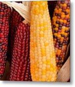 Dry Indian Corn Metal Print