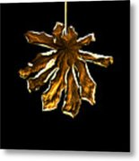 Dry Leaf Collection 4 Metal Print