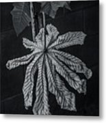 Dry Leaf Collection Bnw 2 Metal Print