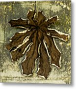 Dry Leaf Collection Natural Metal Print