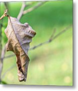 Dry Leaves Metal Print