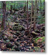 Dry River Bed- Autumn Metal Print